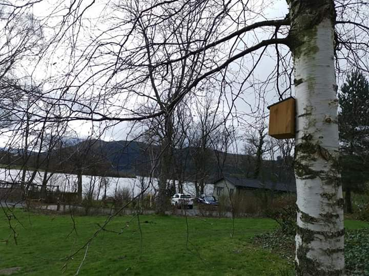 New bird boxes